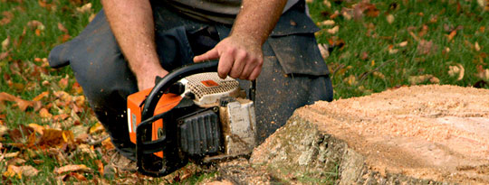 stump removal melbourne - treeman melbourne
