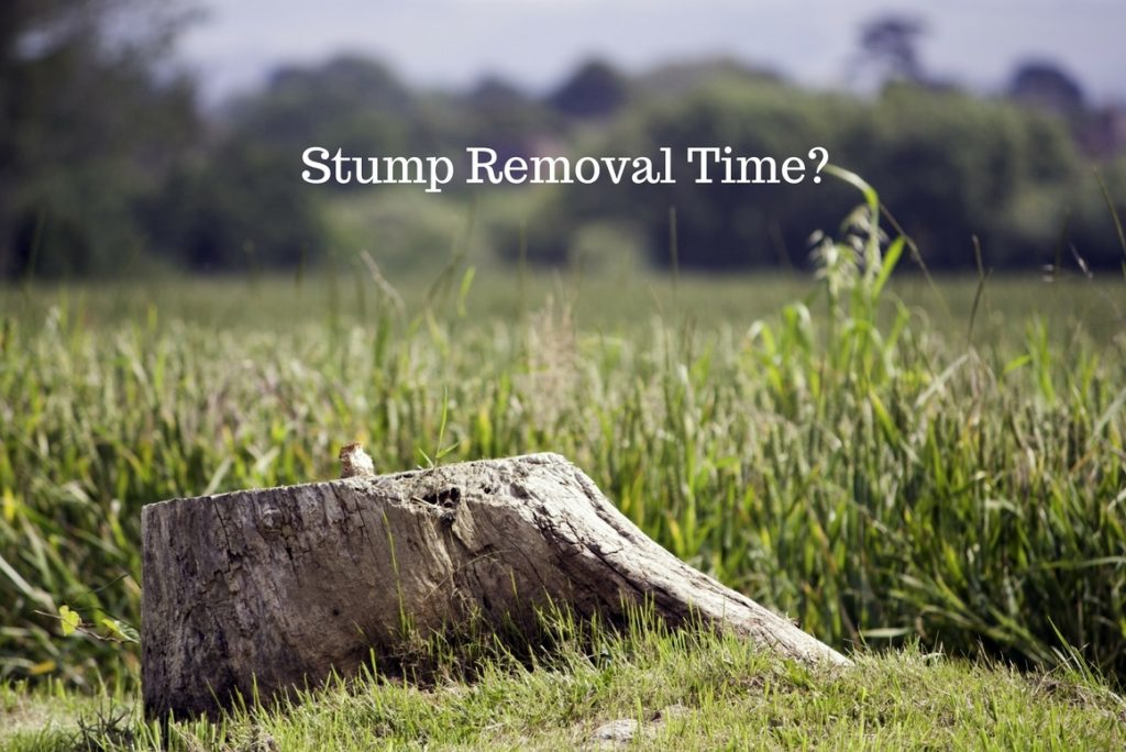 5 reasons to have a stump removed - treeman melbourne
