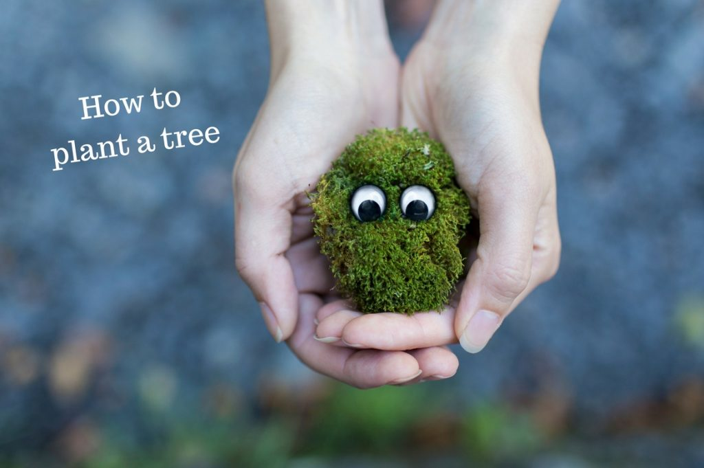 How to plant a tree - Treeman Melbourne