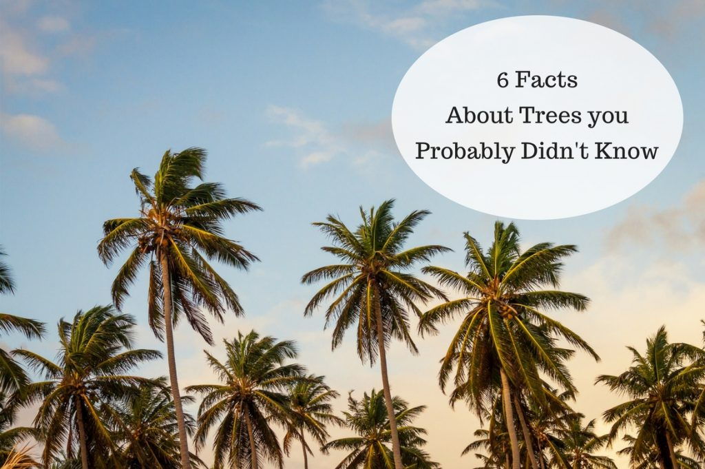 6 Facts About Trees you Probably Didn't Know - Treeman Melbourne