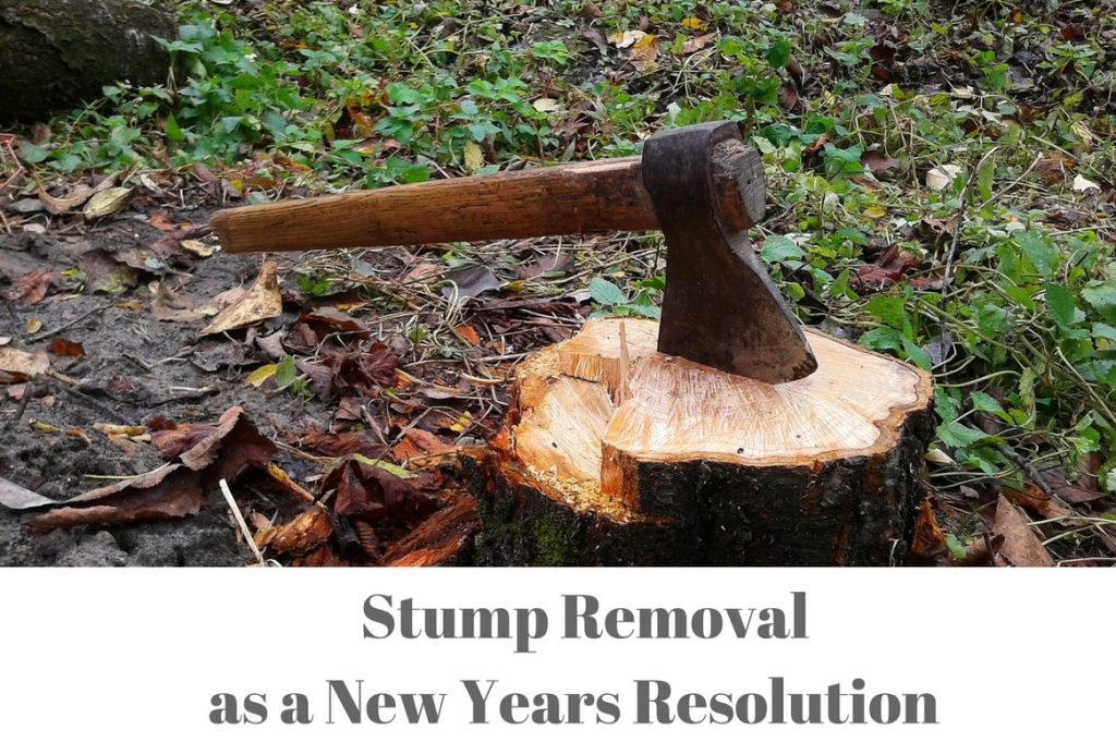 Start off the New Year in Melbourne Without Tree Stumps - Treeman Melbourne