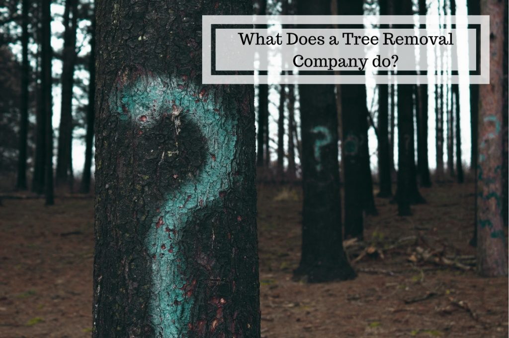 What does a tree removal company do? - Treeman Melbourne