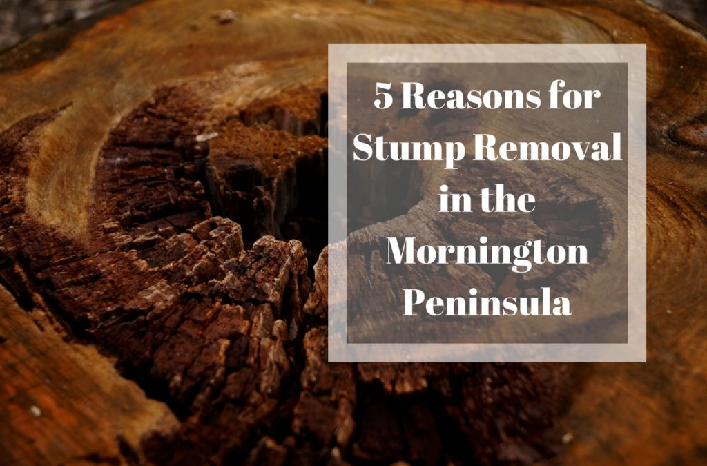 5 Reasons for Stump Removal in the Mornington Peninsula