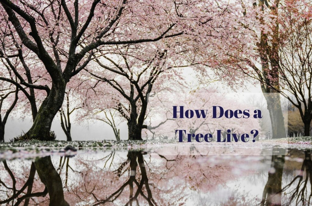 How Does a Tree Live?