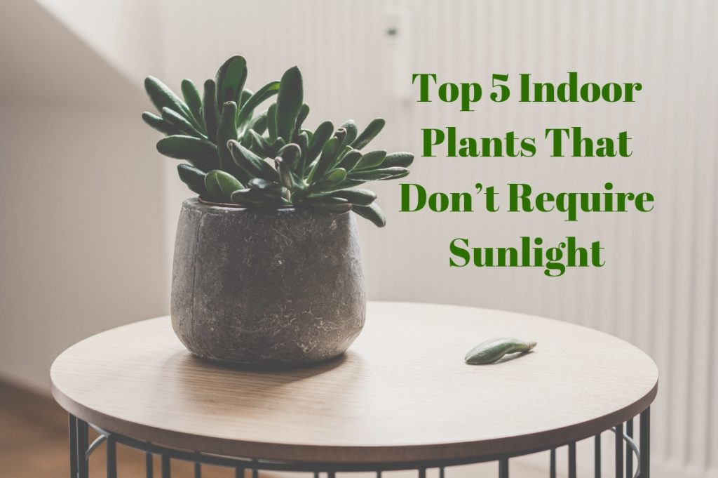 top 5 indoor plants that don t require sunlight treeman melbourne. Black Bedroom Furniture Sets. Home Design Ideas