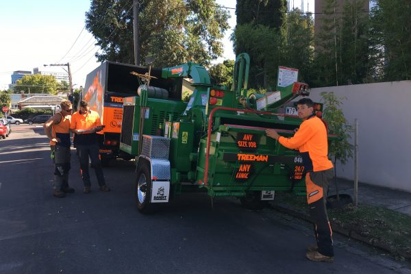 Treeman Tree Pruning Melbourne