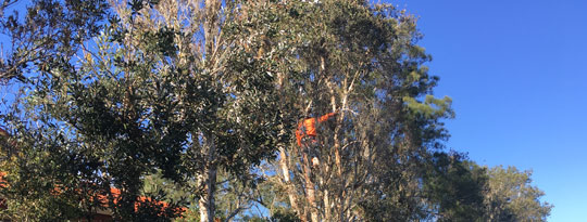Tree Removal Melbourne - Treeman Pruning