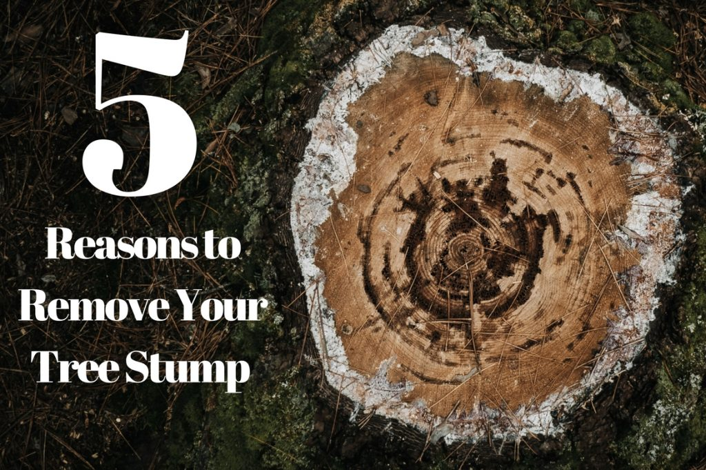 5 Reasons Why You Should Remove Your Tree Stumps
