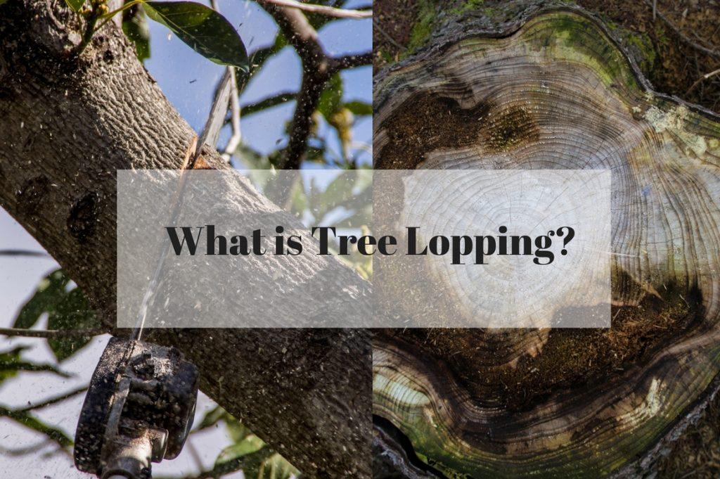 What is Tree Lopping?